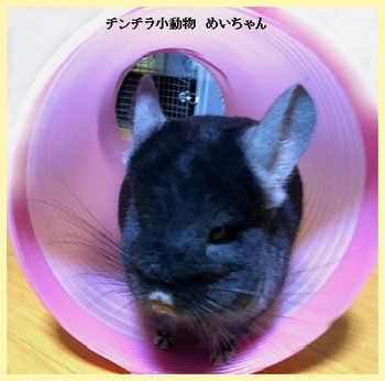 めいちゃん復活.jpg